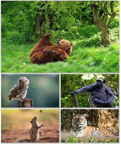 Веселые картинки с животными для фона рабочего стола 104
