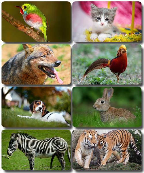 Забавные животные - Коллекция фото обоев (часть 48)
