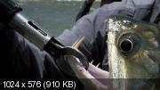 Речные монстры [1 сезон: 7 серий из 7] (2009) DVDRip-AVC