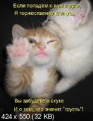 Позитивные котэ 01.06.14