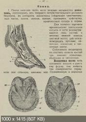 Розеншильд-Паулин - Войсковые учебники. Кавалерiя. Учебникъ для Урядника (1900) PDF