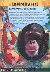 Удивительный мир животных. Шимпанзе (2003) PDF