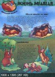 Удивительный мир животных. Медведи (2002) PDF