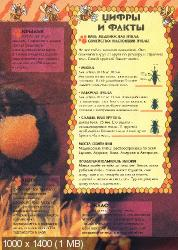 Удивительный мир животных. Пчёлы (2004) PDF