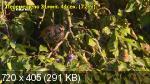 ������ ���  / Secret Garden  (2014) HDTVRip