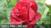 Широкоформатные обои-Цветы